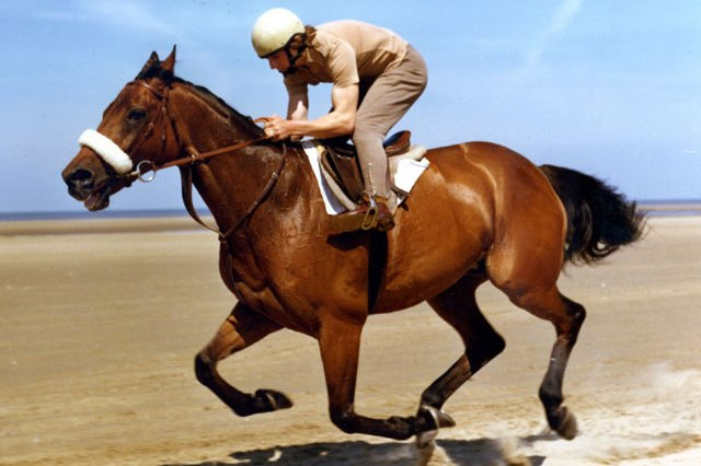 Red Rum Sir Anthony Race Horse