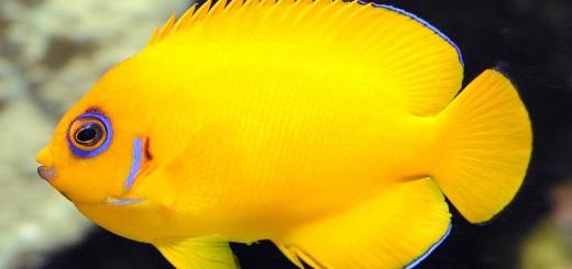 Lemon fish prevailed