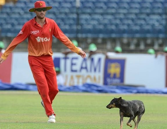 SL v Zim and a dog
