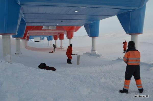 Antarctica cricket