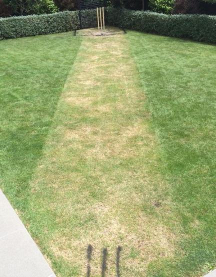Maccas backyard pitch