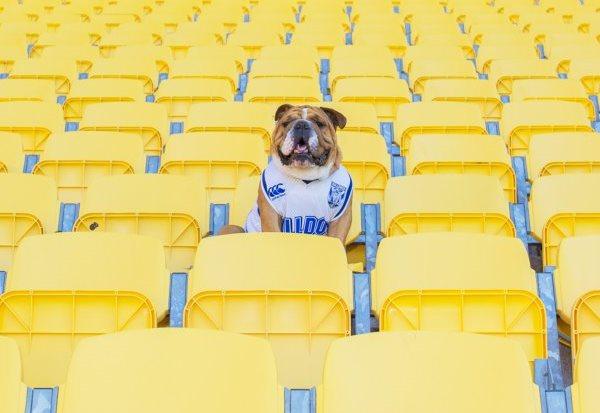 Doggies yellow seats