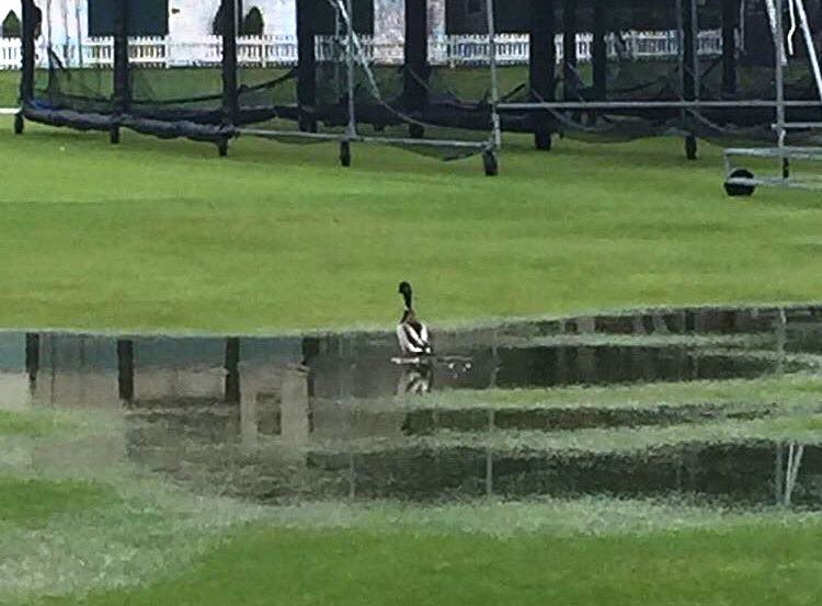 Duck at Lords