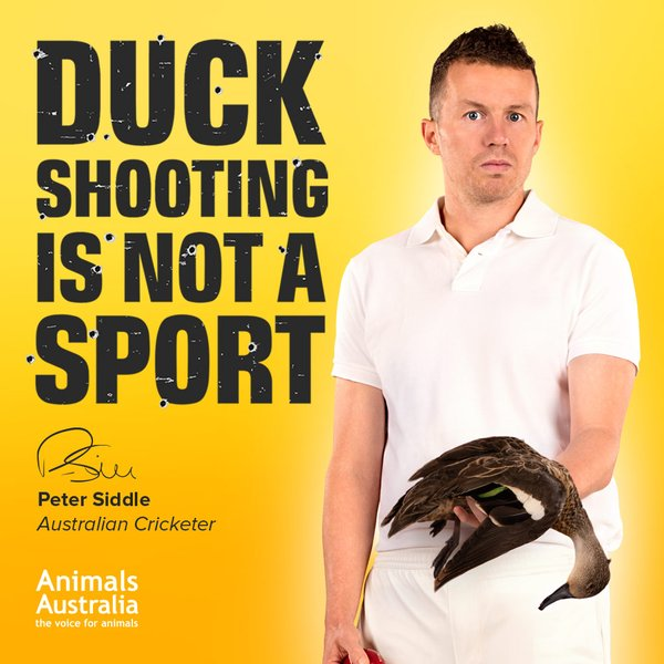 Siddle Ban duck shooting