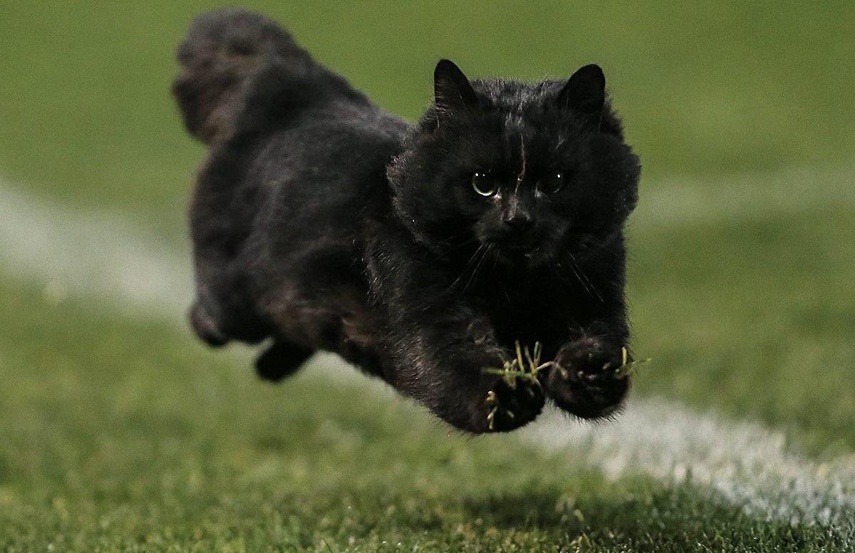 Panthers v Sharks cat