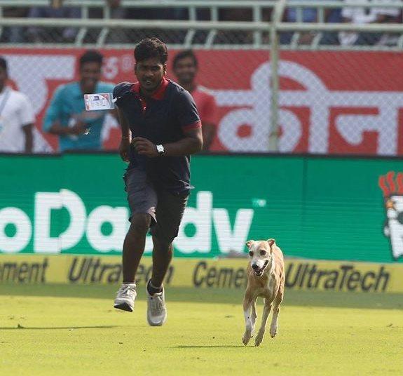 india-cricket-dog