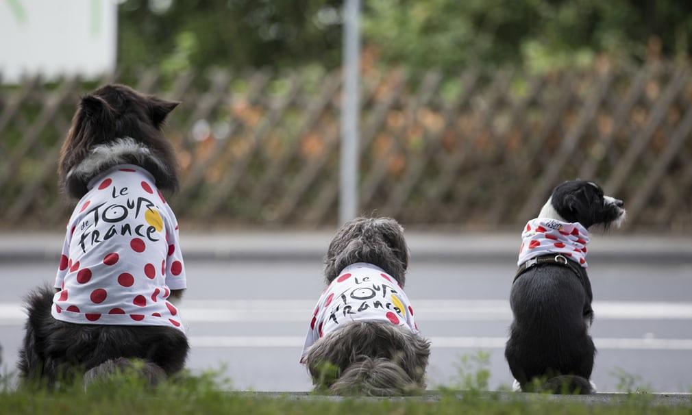 Tour de France le chien